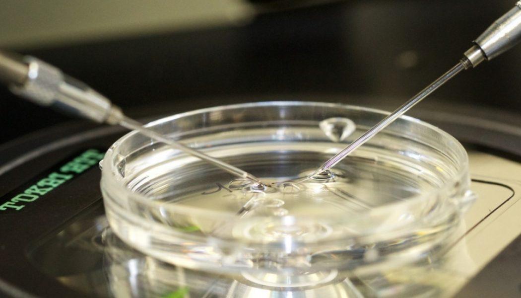 Projet de loi relatif à la bioéthique. La foire aux incohérences