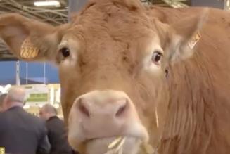 Salon de l'agriculture : petits producteurs vs grands groupes ?