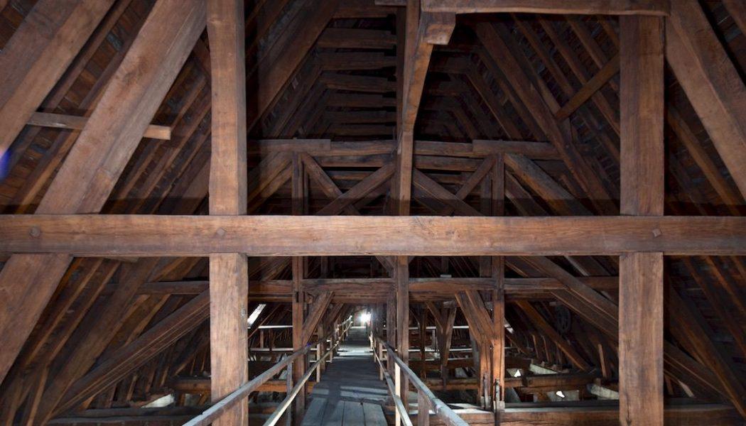 Les Coopératives Forestières offrent leurs chênes pour Notre-Dame de Paris