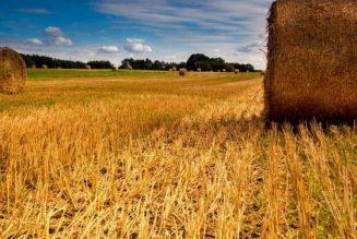 Alimentaire : Les paysans français meurent et les Français s'empoisonnent…