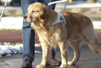 Chronique des cinglés : Est-il moral pour un aveugle d'avoir un chien-guide ?