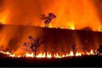Et si les incendies en Australie étaient une conséquence de la dictature écologique et non du réchauffement climatique ?