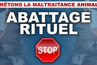 Discours sur le séparatisme islamiste : Macron évite lâchement le sujet de l'abattage rituel