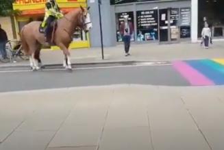 Les chevaux seraient homophobes