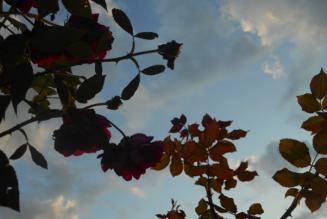 Toussaint et jour des défunts : Tous pour Un et Un pour tous